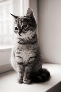 おすまし猫.jpg